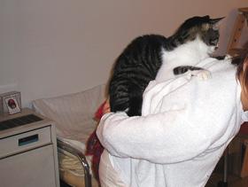 背のり猫.jpg